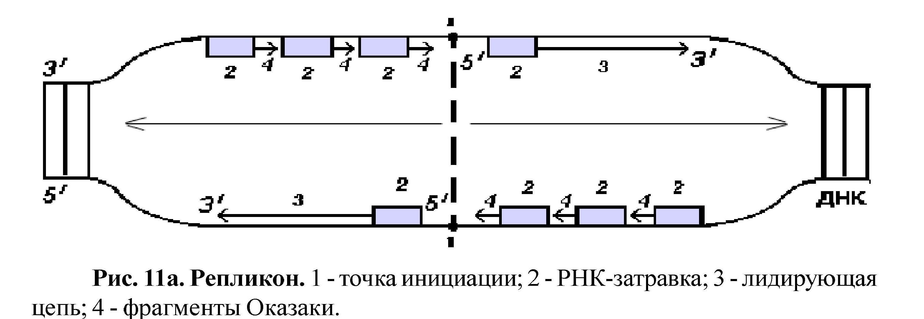 Реакция Цепи Полимеразы