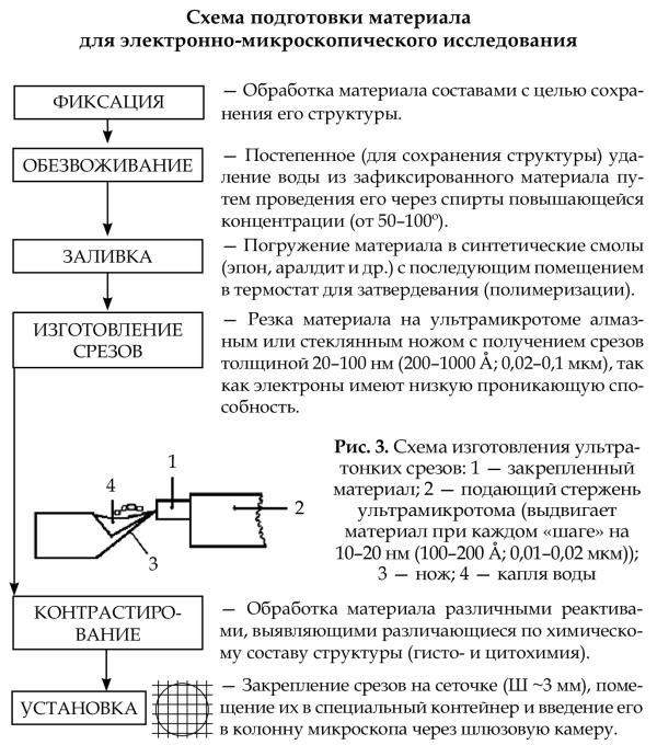 светового микроскопа.