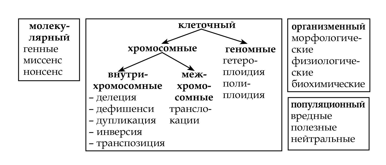 классификация мутаций реферат