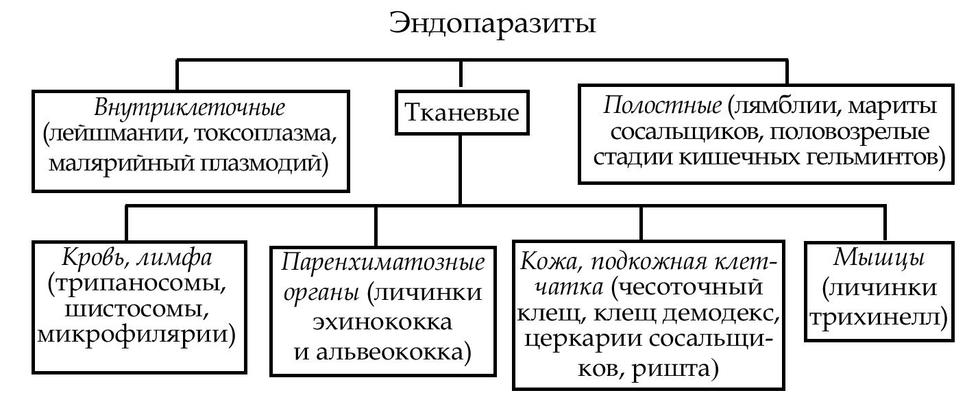 гельмостоп обман