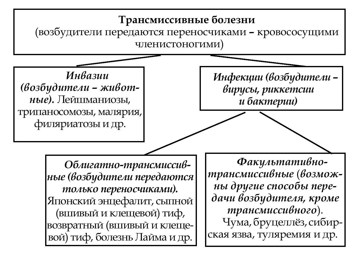 схема заражения человека власоглавом