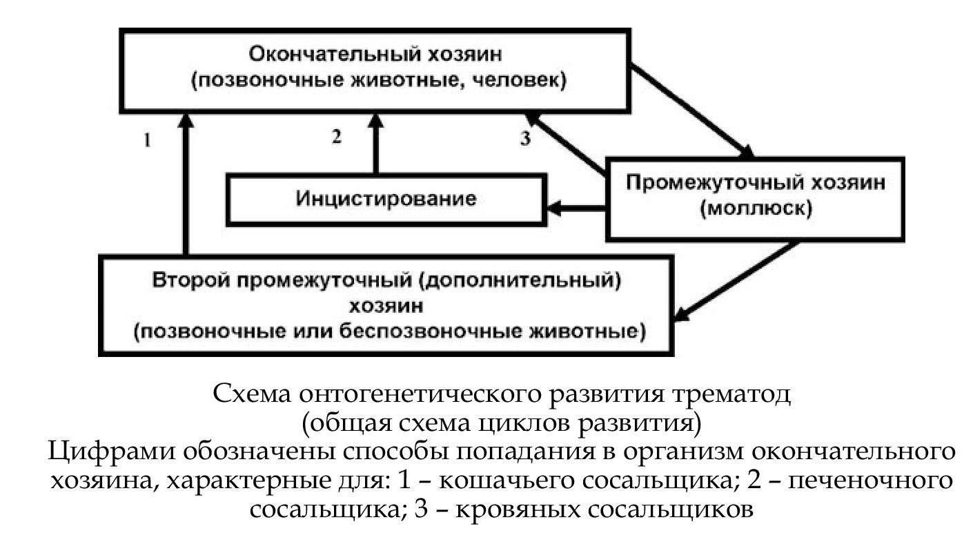 Лямблии определение антигена в кале